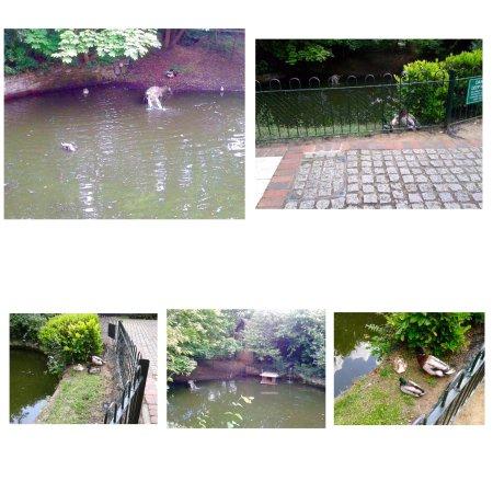 Kesgrave, UK: photo3.jpg