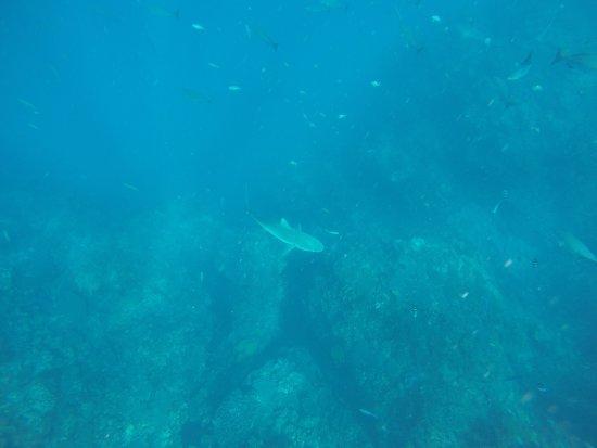 Coral Bay, Australien: GOPR2751_1495965470981_high_large.jpg