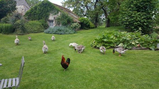 Les Jardins de Roquelin: Il giardino