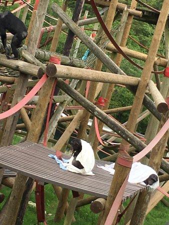 Monkey World: photo5.jpg