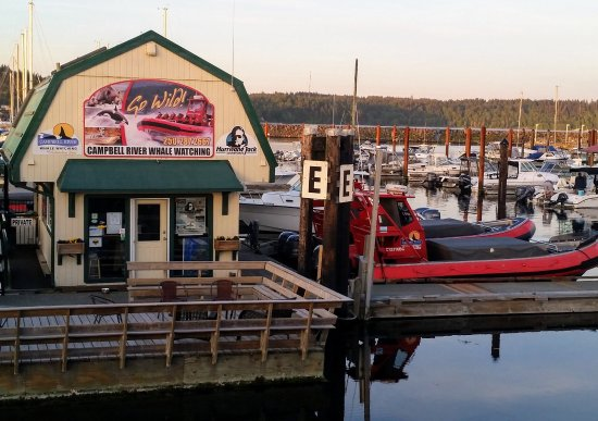 Campbell River, Canada: Jack's tour office and red zodiaks