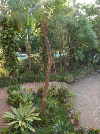 Garden with view of pool amongst trees