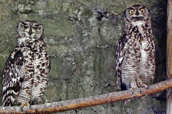Hassmersheim, Γερμανία: Volierenvögel