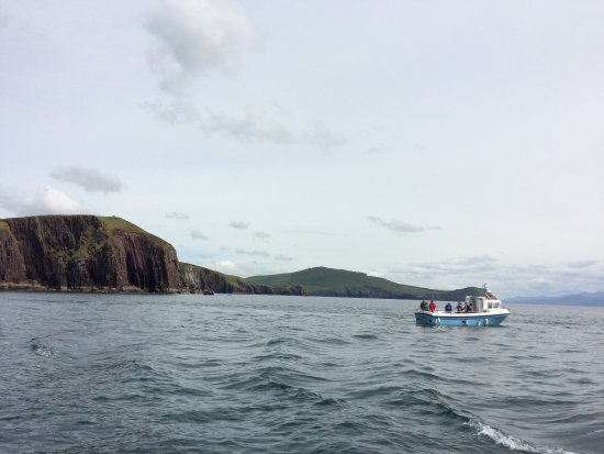 Dingle Bay Charters: photo3.jpg