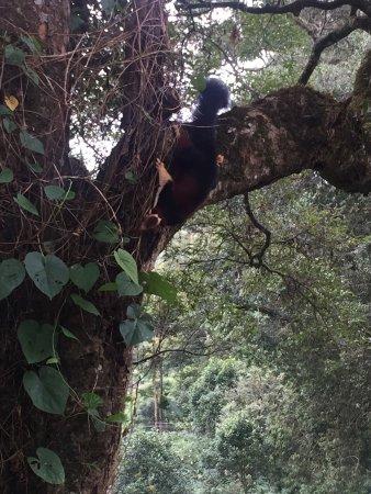 The Tall Trees Munnar : photo0.jpg