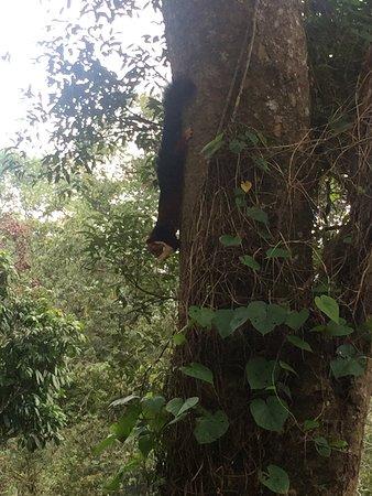 The Tall Trees Munnar : photo1.jpg
