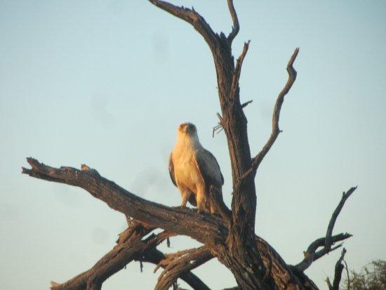 Kang, Botswana: On a game drive