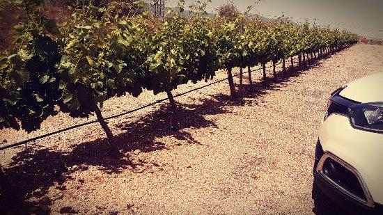 Hotel del Vino: Visita a la bodega . Muy completa . Excelente el vino de Cariñena.