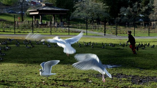 Tacoma, WA: Park