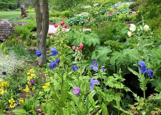 Streamside gardens, RHS Harlow Carr - Picture of RHS Garden Harlow ...