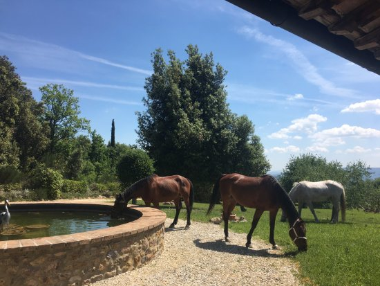 Monticiano, Italia: Horses grazing next to the courtyard area on Villa grounds.