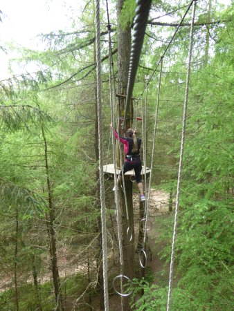 Go Ape Whinlatter: In the trees at Go Ape!