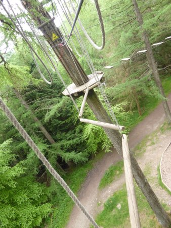 Go Ape Whinlatter: In the trees at Go Ape! Optional extreme path
