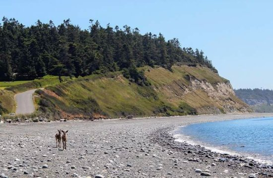 Coupeville, WA: Even the deers like the beach