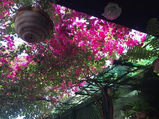 El Jardin de Los Milagros : Patio