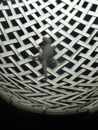 Jecko Sur La Lampe De Terrasse De Notre Bungalow Ceng Kih Picture