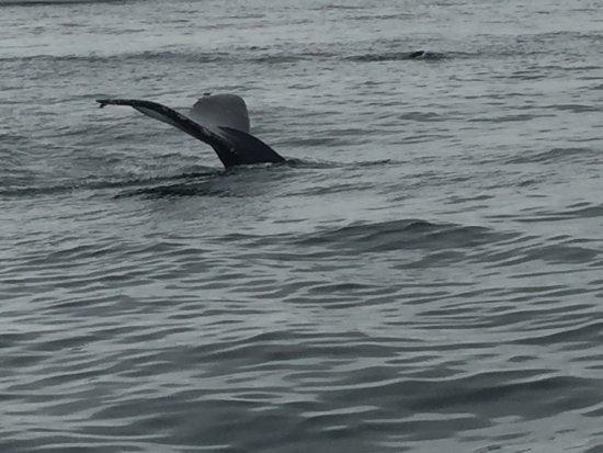 Moss Landing, Kalifornia: Doesn't get better than this. Took the 9:30 boat on 5/28.