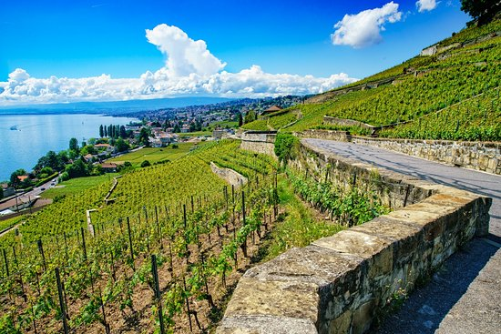 Lutry, Zwitserland: Terraces Vineyards