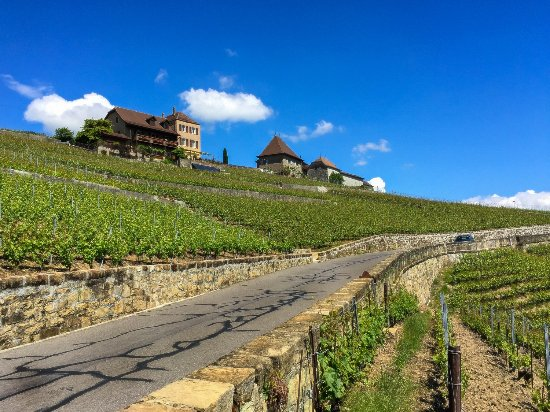 Lutry, Zwitserland: Lavaux Vineyards