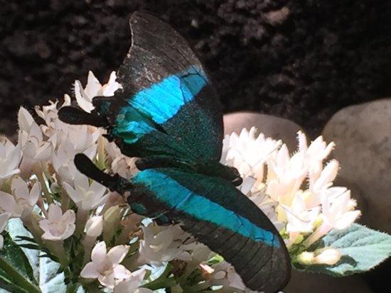 Grevenmacher, Luxemburgo: butterfly