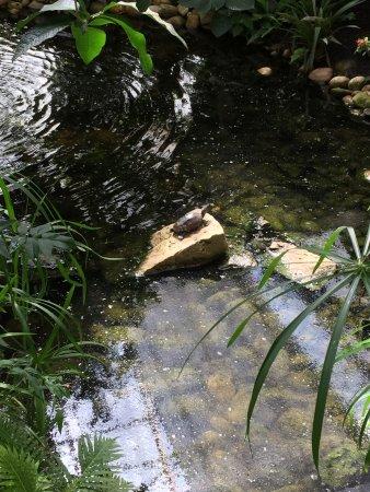 Grevenmacher, Luxemburgo: turtle