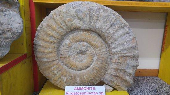 Museum - Museo archeologico naturalistico di Tarcento