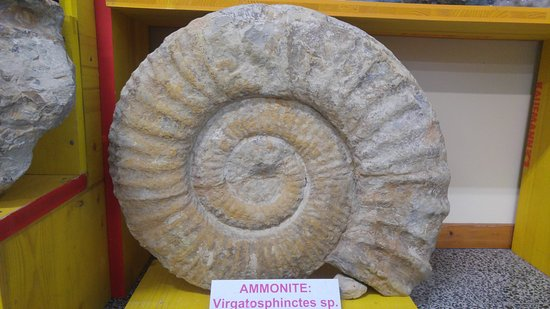Tarcento, Italie : Fossili