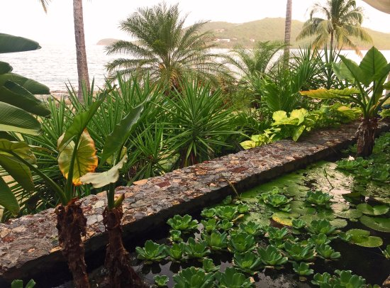 Frenchtown, St. Thomas: Water Garden Inside Oceana
