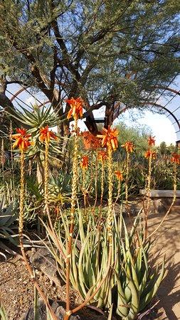 Desert Botanical Garden Phoenix Az Top Tips Before You Go Tripadvisor