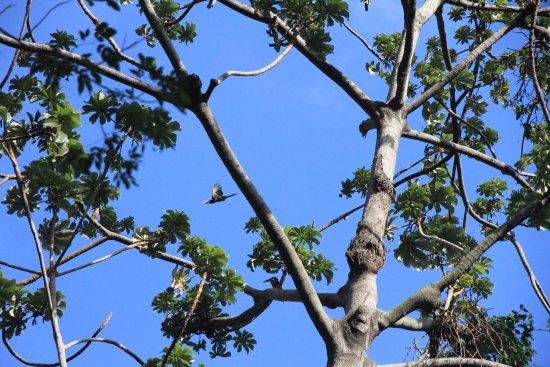 Ticuantepe, นิการากัว: photo4.jpg