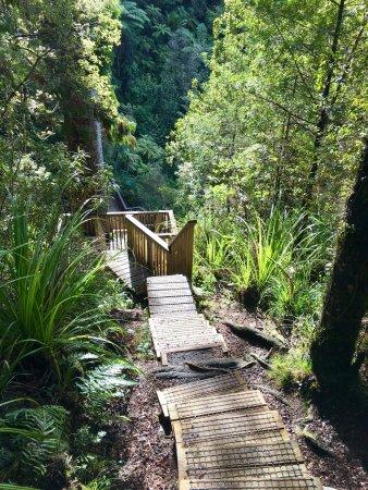 Auckland Region, Nuova Zelanda: photo3.jpg