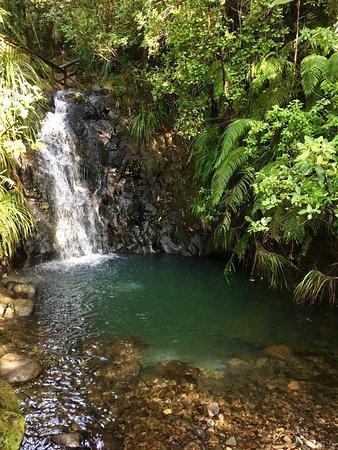 Auckland Region, Nuova Zelanda: photo4.jpg