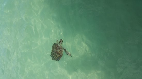 Great Abaco Island: 20170515_103025_large.jpg