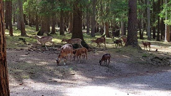 Pegnitz, ألمانيا: Wildgehege Hufeisen  / Veldensteiner Forst