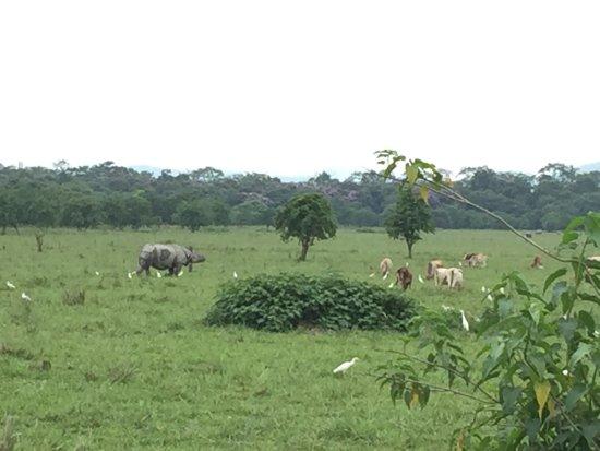 Pobitora Wildlife Sanctuary: photo2.jpg