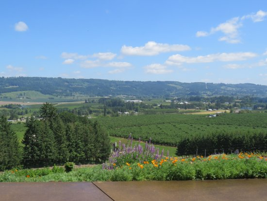 Newberg, OR: Not a Bad View.....