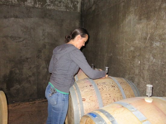 Newberg, OR: Tapping the barrel for a taste!