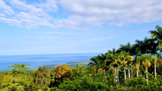 Aloha Guest House: View from the Halawai Room