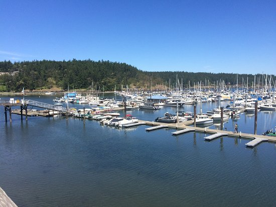 Puget Sound Express - Day Trips: A view of Friday Harbor where we had a 2 hour lunch break or walk about.