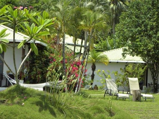 Ojochal, Costa Rica: Garden in the morning.