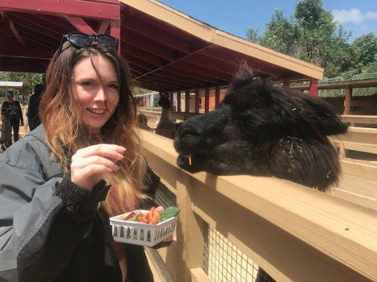 ZOOMARS Petting Zoo: Adorable fun!