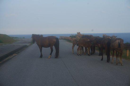 Minami Farm: 道路を馬がふさいでます。全然怖がらないです