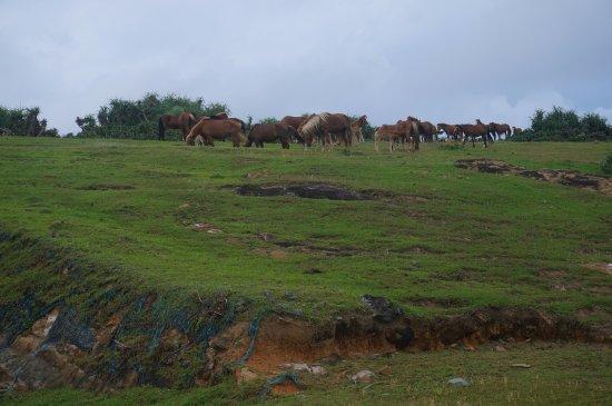 Minami Farm: 与那国馬があちこちにいます