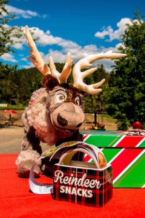 Leavenworth, WA: Come feed the reindeer!!!