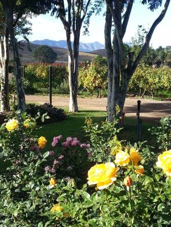 Robertson, Sydafrika: Van Loveren Vineyard at its very best
