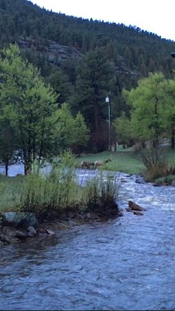 Paradise on the River: View of crossing elk.