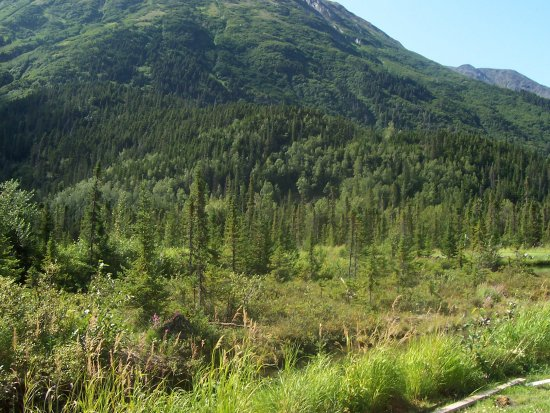 Moose Pass, AK: A view from the back yard