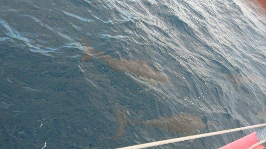 Nelson Bay, Australia: DSC_2490_large.jpg