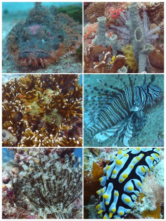 The Reef Dive Resort: photo1.jpg