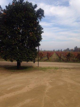 Σάντα Κρουζ, Χιλή: photo0.jpg